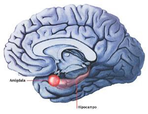 Amígdala cerebelosa