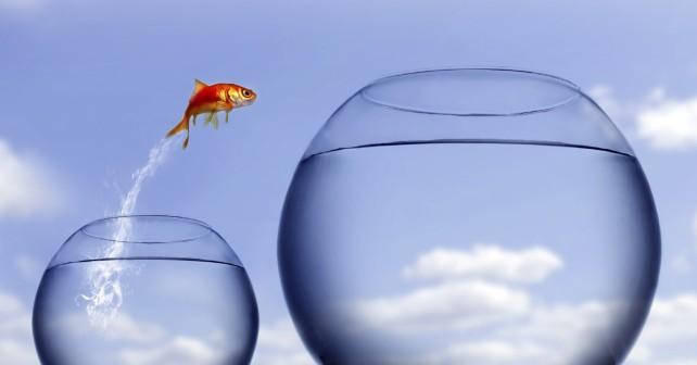Peixe com Coragem