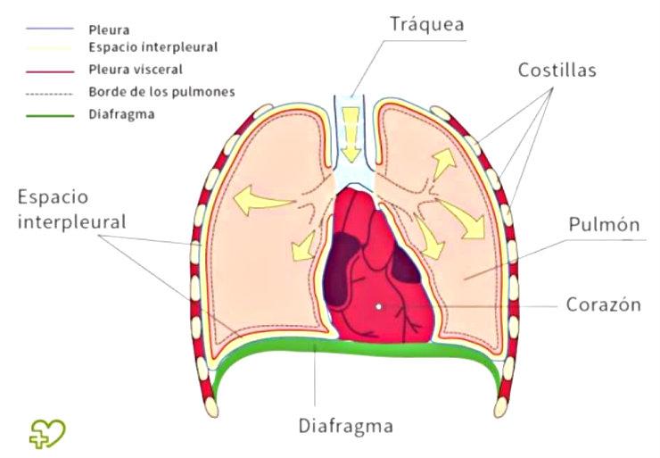 respiração diafragmática